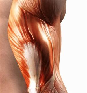 3-22-08-artificial-muscle-wince.jpg