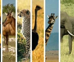 animalss