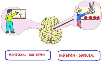 beyin3