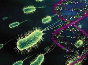biyoloji-haber-yapay-yasam