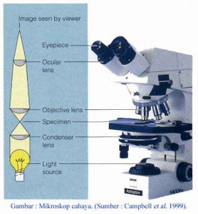 mikroskop2 278x300