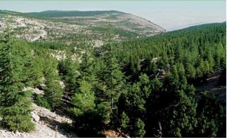 Türkiye'de yapılan ağaçlandırma çalışmalarının önemi