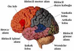 Ayna Nöronlar Nedir? 547 zo1
