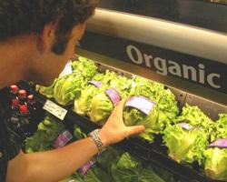 organic_food [320x200]