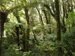 683 Yamur Ormanlar 2 300x225