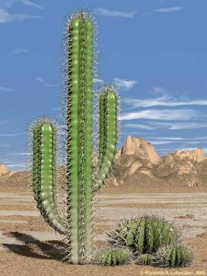 683-cactus2s-300x400