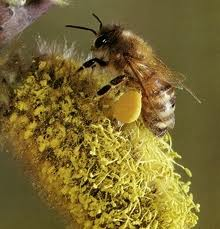 1049-polen2