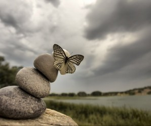 2017-1833419-kelebek-etkisi