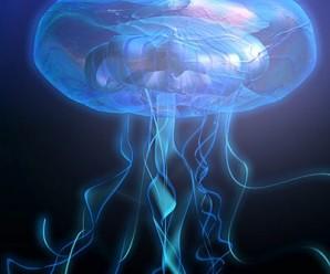 2047-jellyfish3_jpgece63b3b-bd44-4966-b2c7-08205843086dLarge