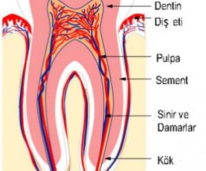 2451_dis_resmi_3_dental