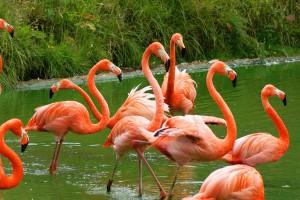 3331_flamingo1