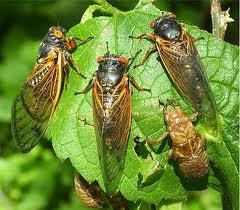 baöcek