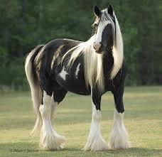 At Nasıl Bir Hayvandır Bilgiustam