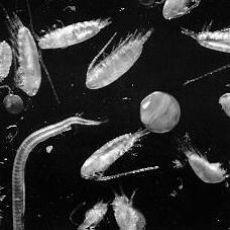 4088_plankton