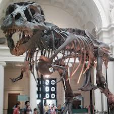 4107_fosil-bilim