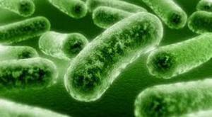 4302_bakteri