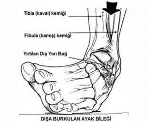 4546_ayak_bilegi
