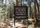 4581_aokigahara-el-bosque-maldito