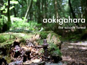 4581_aokigahara-title-001