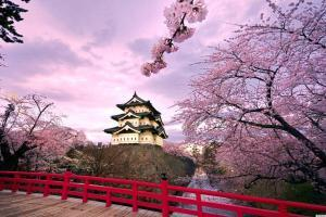 4628_o-cherry-blossom-tree-japan-facebook