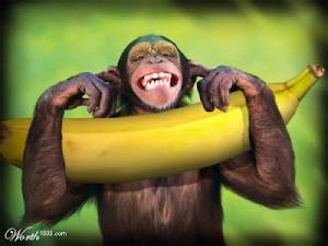 4726_republiqueta-de-bananas