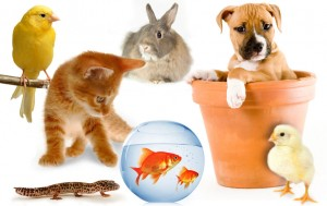 4890_group-of-pets