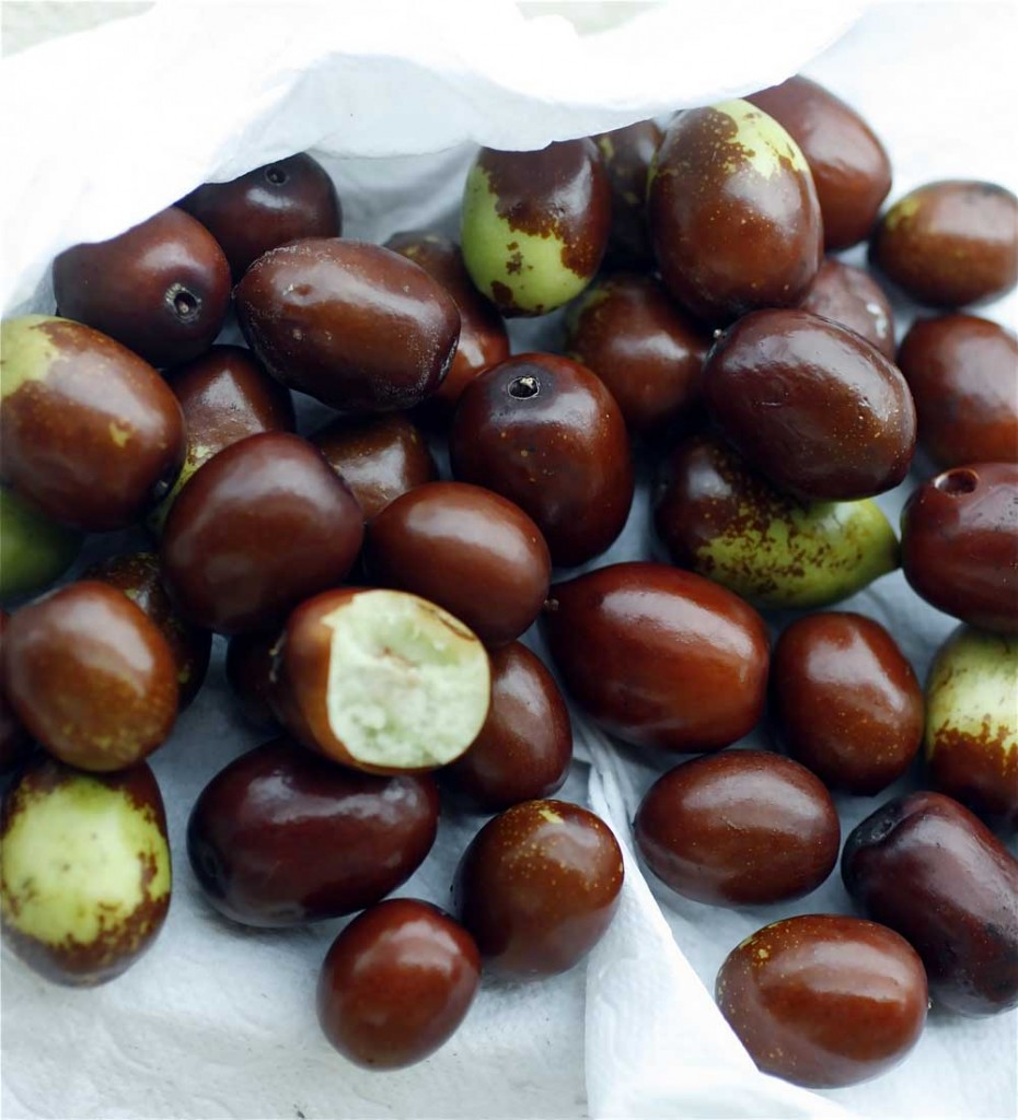 Hünnap meyvesinin faydaları nelerdir