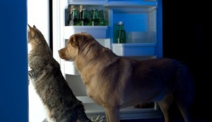 5067_dog-cat-toxic-foods