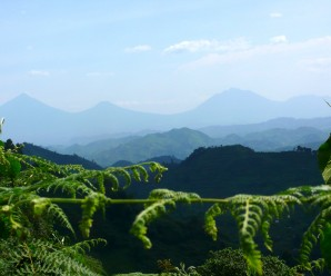 Muhavura, Gahinga, Sabinyo (from left to right, east to west)
