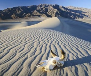 A skull on a sand dune in Death Valley, California