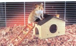 5367_pet.hamster2 (1)