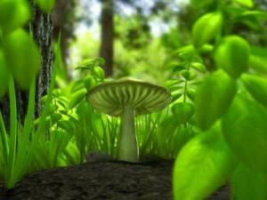 Fotosentez-Resimleri-photosynthesis-image-1