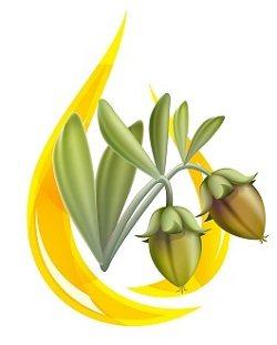 5601_jojoba-oil-plant