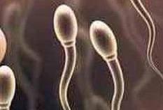 5690_sperm