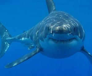 5697_shark