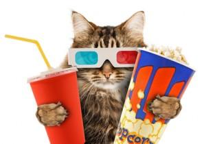 5711_cat_watching_movie
