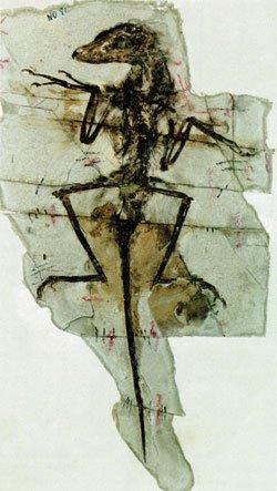 dromaeosauridae01_01