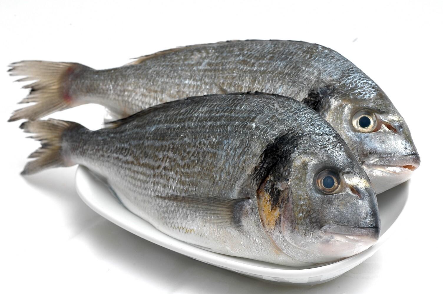 Barbunya Nasıl Bir Balık Türüdür