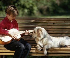 6780_dog_music