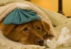 7803_154956-424x294-sick-doggie