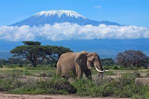 8433_kilimanjaro