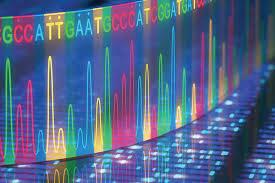 Genlerin Aktivitesi Nasıl Tespit Edilir? » Bilgiustam