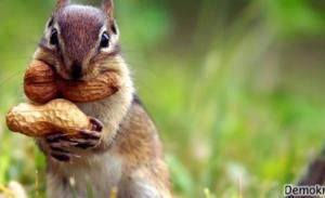 Sincaplar Nasıl Hayvanlardır?