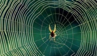 Evinizdeki Örümcekleri Neden Öldürmemelisiniz?