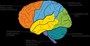 Görme Kaybından Sonra Beyin, Daha İyi Duymaya Nasıl Adapte Olur?