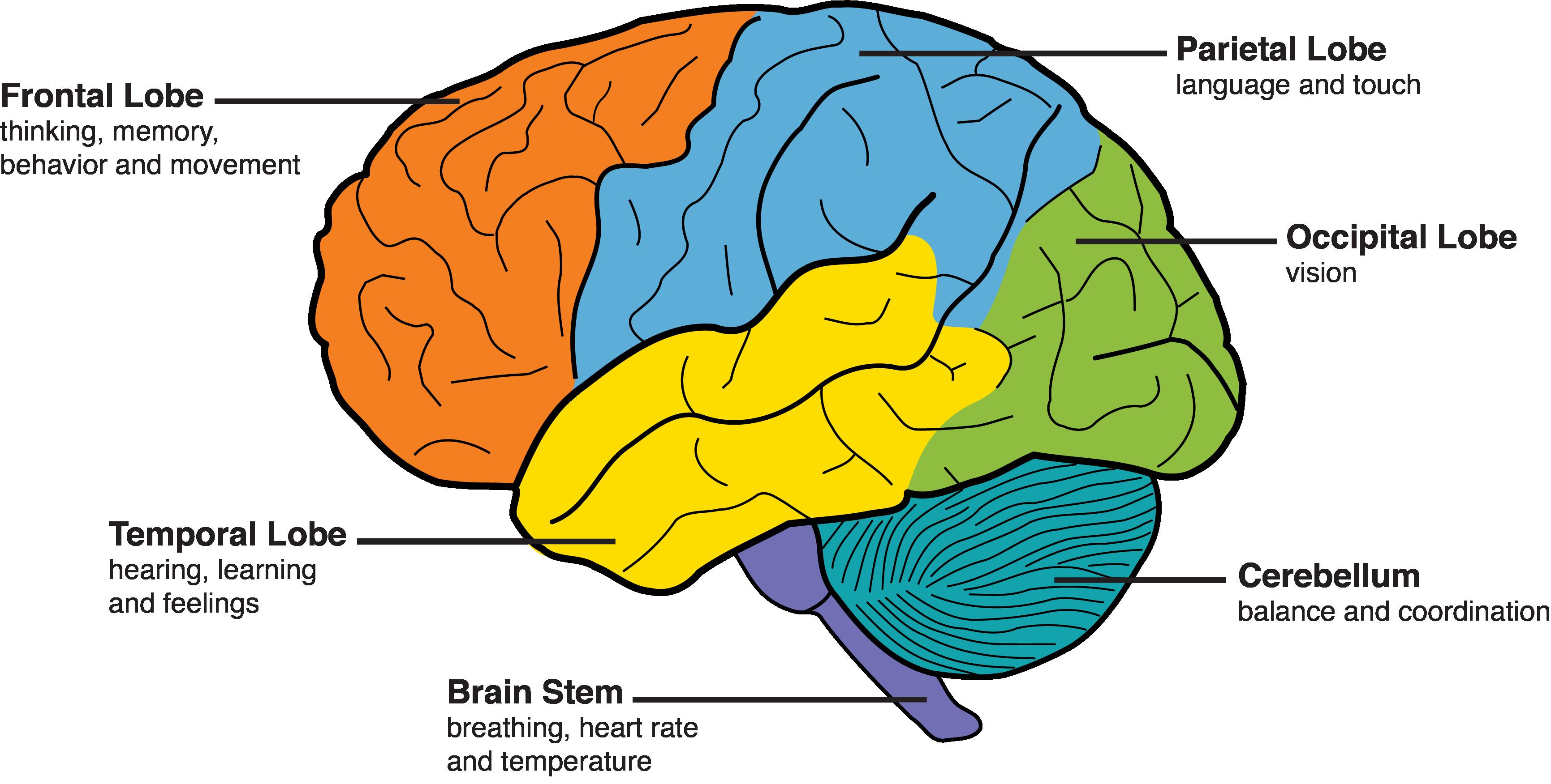 Görme Kaybından Sonra Beyin, Daha İyi Duymaya Nasıl Adapte ...