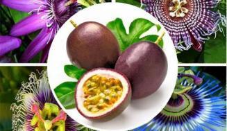 Passiflora (Çarkıfelek) Bitkisi Nedir, Yan Etkileri Nelerdir?