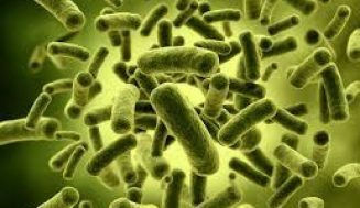 L. Acidophilus Nedir, Sağlık Açısından Faydaları Nelerdir?