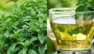 Nane Çayı Nasıl Yapılır, Sağlık Açısından Faydaları Nelerdir?