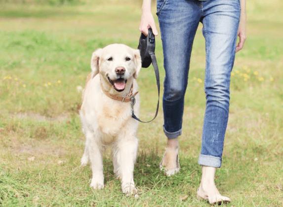 Köpeğinizle Yürüyüş Yaparken İhtiyaç Duyacağınız Aksesuarlar